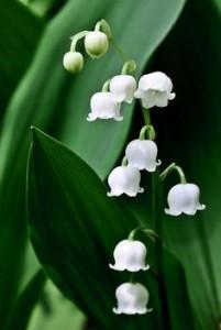Доставка цветя
